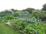Fruit and Vegetable Beds