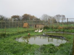 Duck and hen enclosure 2