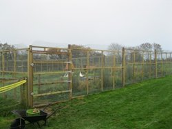 Duck and hen enclosure