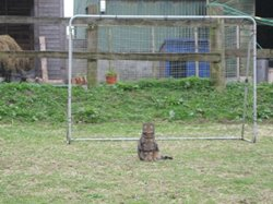 Robbin the cat, safe paws in goal